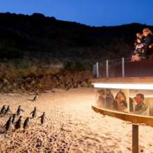 Phillip Island Penguin Parade set for a $48.2m makeover in this year's state budget